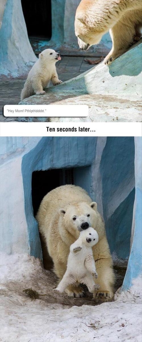 kids polar bear parenting tongue out - 8280992768