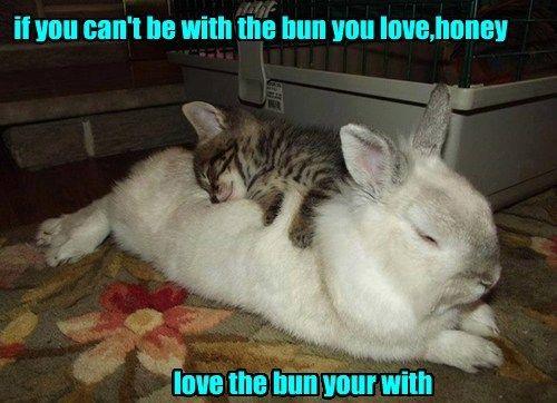 kitten puns cute bunny rabbits - 8281086720
