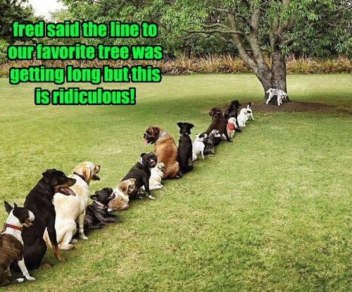 dogs trees peeing - 8281090560