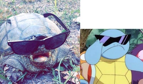 IRL Deal With It squirtle - 8281094400