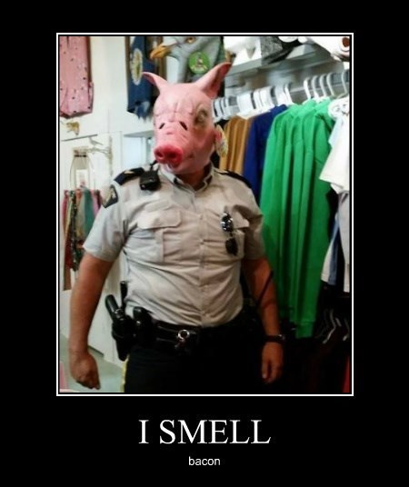 cops pig funny bacon - 8281105664