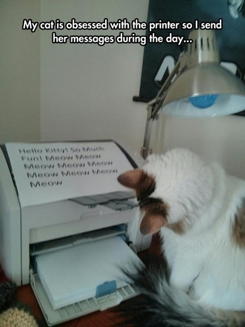 printers Cats funny - 8281229056