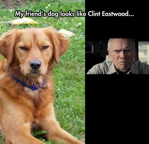 dogs totally looks like Clint Eastwood celeb - 8281232384