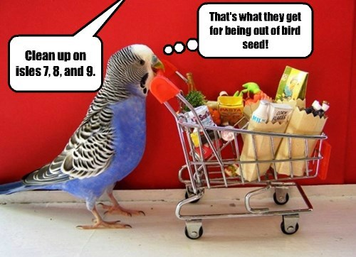 poop birds shopping - 8281243392