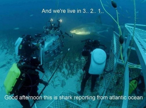 news sharks TV funny