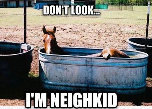 puns bathroom horse - 8281252352