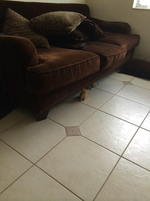 kitten tiny cute - 8281308416