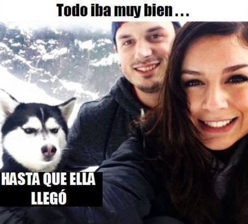 bromas perros Memes animales - 8282009344