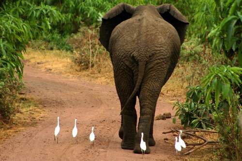 cute,world elephant day,elephants,caption