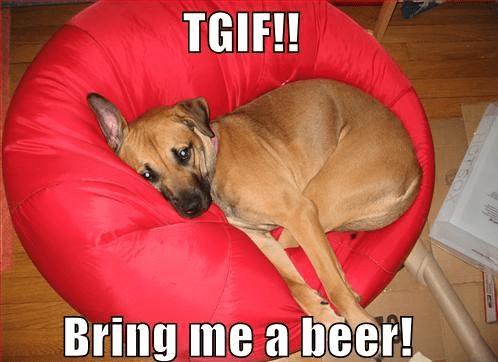 beer dogs weekend funny - 8282122496