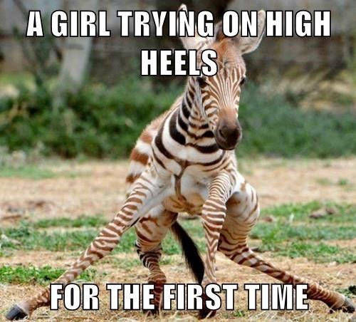 zebra girls high heels funny
