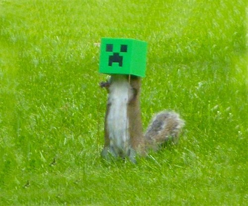 feeder,creeper,squirrel,minecraft