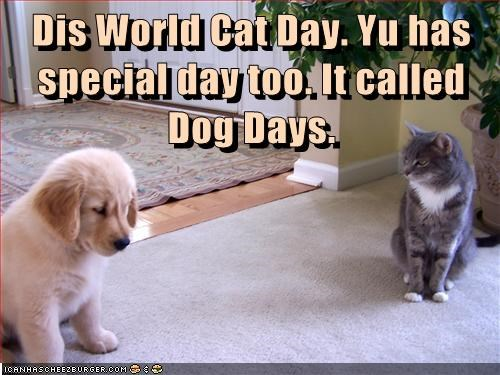 dogs puppies world cat day cute - 8282190848