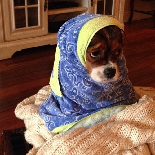 so cute dogs so sad