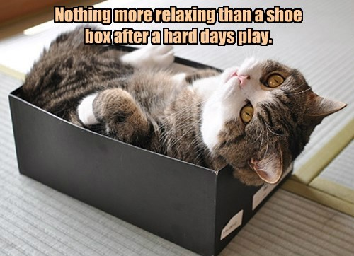 Nothing more relaxing than a shoe box after a hard days play.