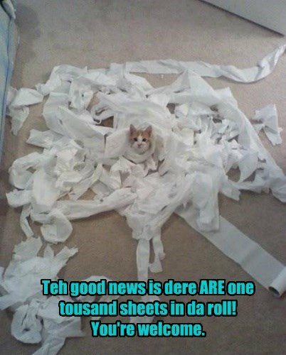 advertising toilet paper Cats funny