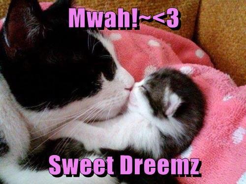 Babies kitten KISS mama cute - 8284004608