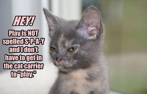 cute vet Cats - 8284224768