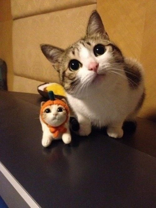 cute Cats squee