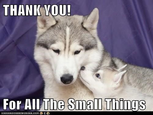 THANK YOU!  For All The Small Things