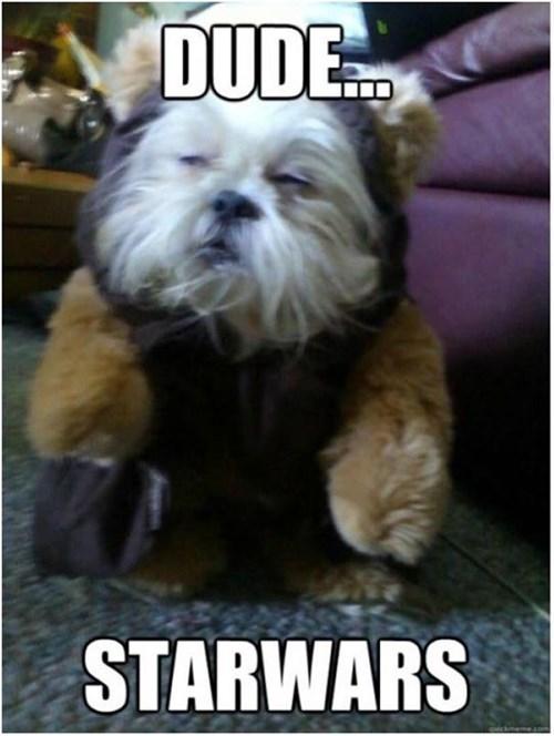 dogs star wars ewok funny - 8284616448