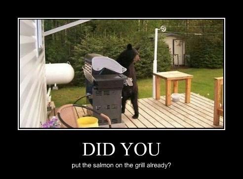 summer bear grill funny - 8284702208