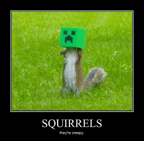 creeper,squirrel,minecraft
