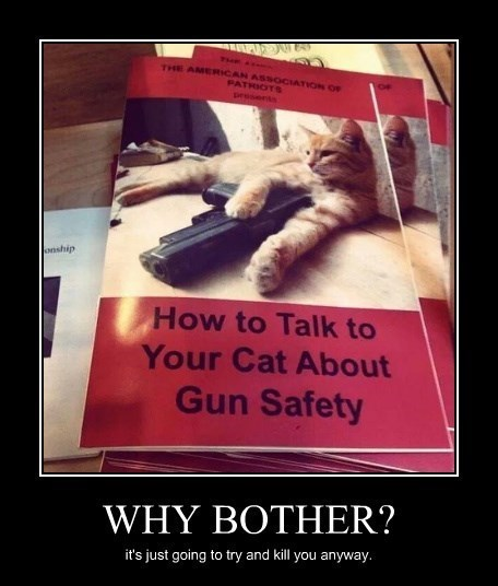 guns safety Cats funny - 8284705792