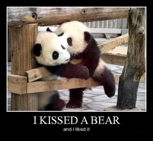 panda bears sexy times funny - 8284706560