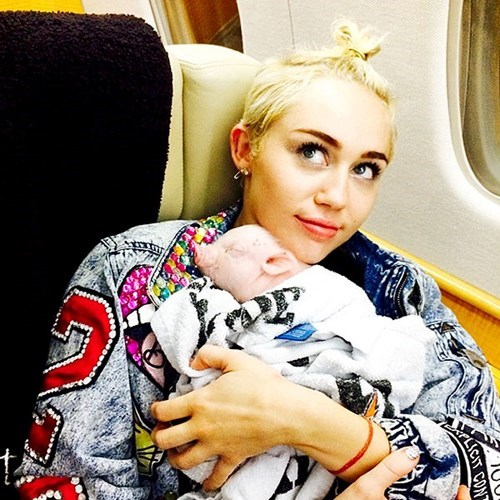 pets,people pets,cute,miley cyrus,piglet