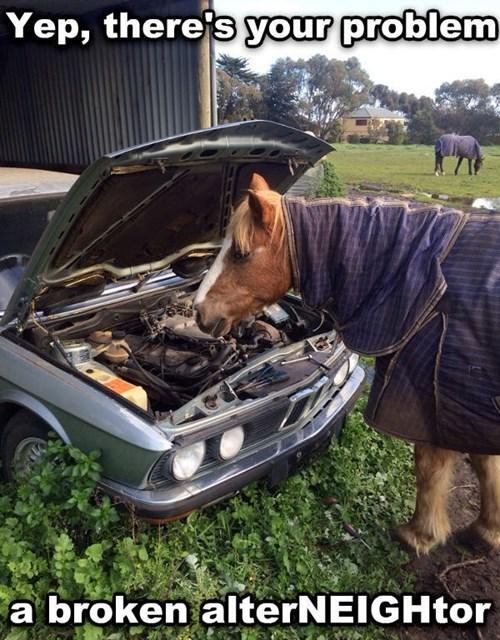 puns,cars,horses