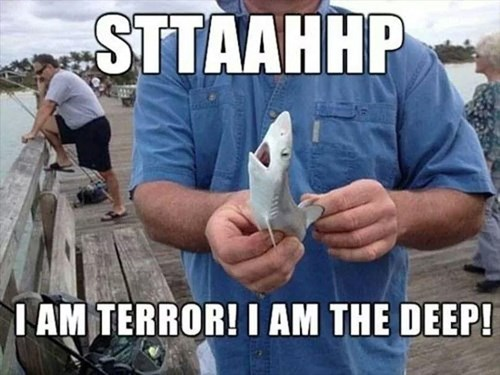 tiny sharks funny - 8284827648