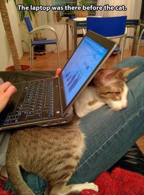 snuggle cute laptop Cats - 8284865792