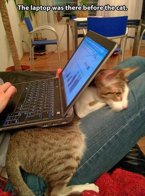 snuggle cute laptop Cats - 8284865792