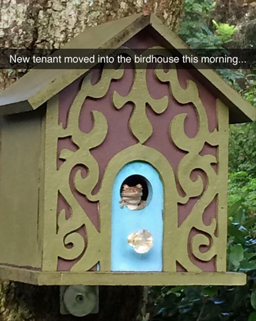 cute,funny,birdhouse,frogs