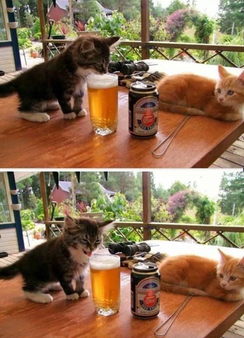beer Cats - 8284921856