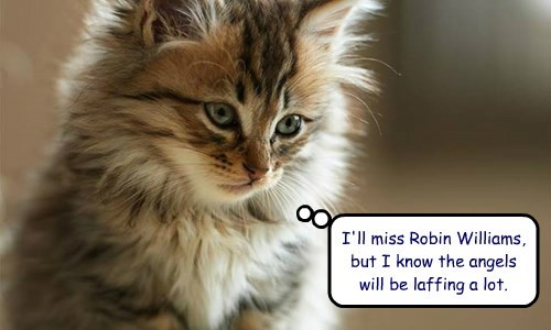 kitten robin williams rip - 8285089280