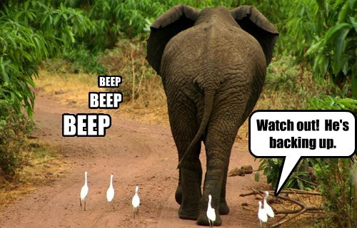 Elephant - BEEP BEEP BEEP Watch out! He's backing up