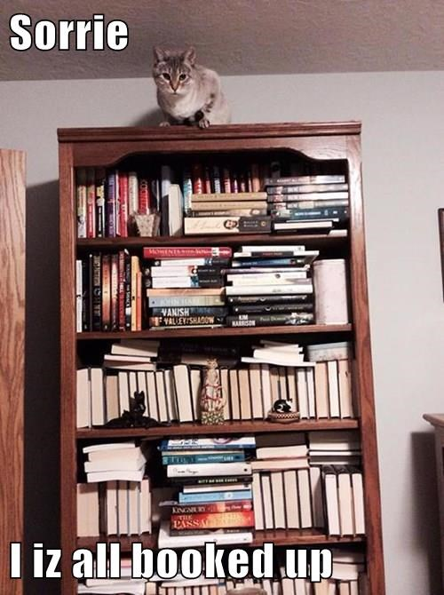 puns books Cats - 8285164800