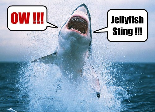 shark week,shark,jellyfish