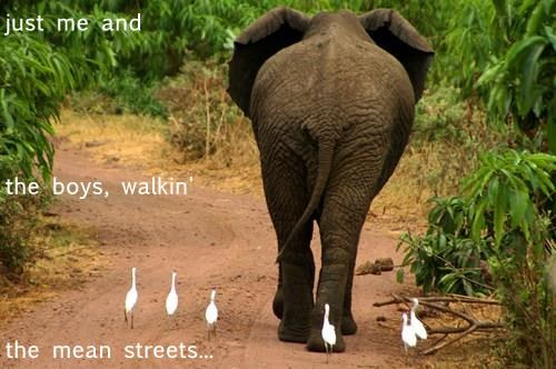 Elephant - just me and the boys, walkin the mean streets...