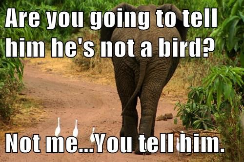 Elephant - Are you going to tell him he's not a bird? Not me...You tellihim.