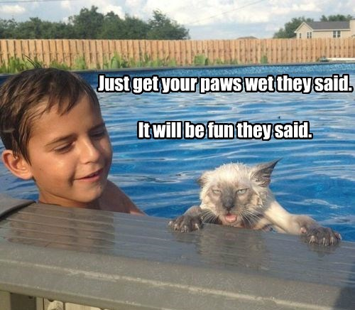 annoyed,wet,pool,Cats