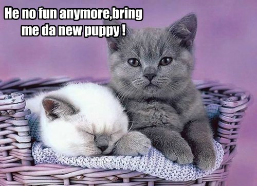 kitten puppies cute bored - 8285398784