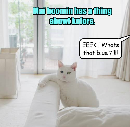 white ocd Cats funny - 8285416960