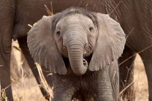 hair,the nature conservancy,cute,world elephant day,elephants