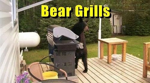 bear grylls bears puns funny - 8285511936