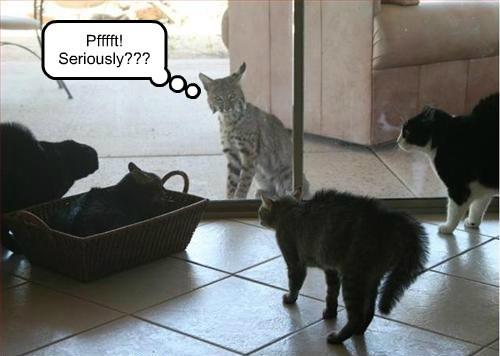 big cats Cats - 8285674496