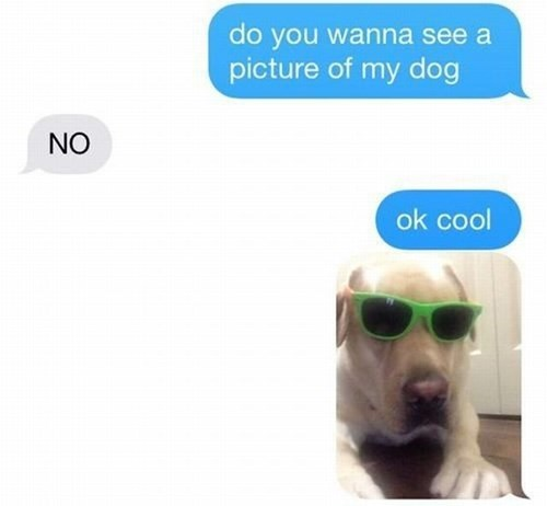 dogs sunglasses Deal With It texting - 8285908736