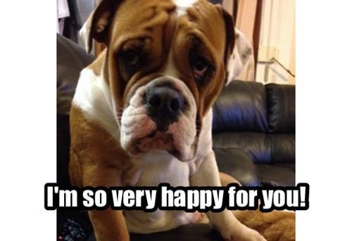 dogs sarcasm - 8285981952